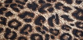 Osez le léopard !