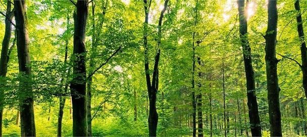 En quelques clics, découvrez nature-bois-concept.com